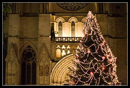 Sapin devant la cathédrale
