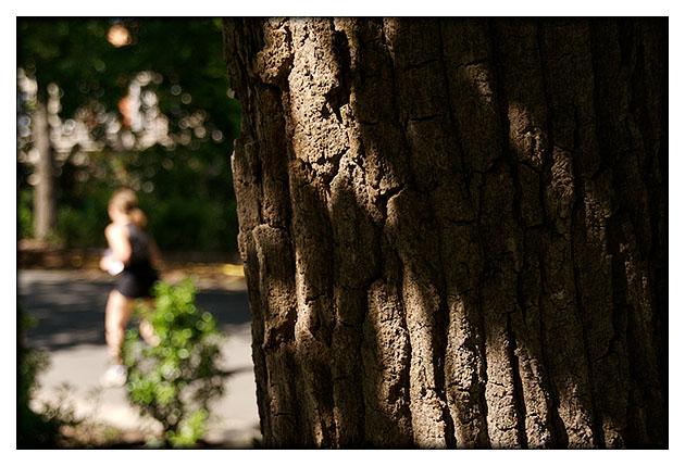 Derrière les arbres..