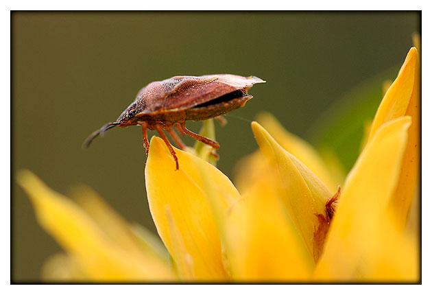 Insecte au décollage