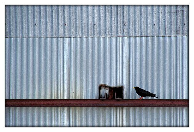 Oiseau sur la poutre