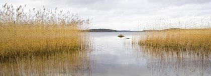 Lac Saima
