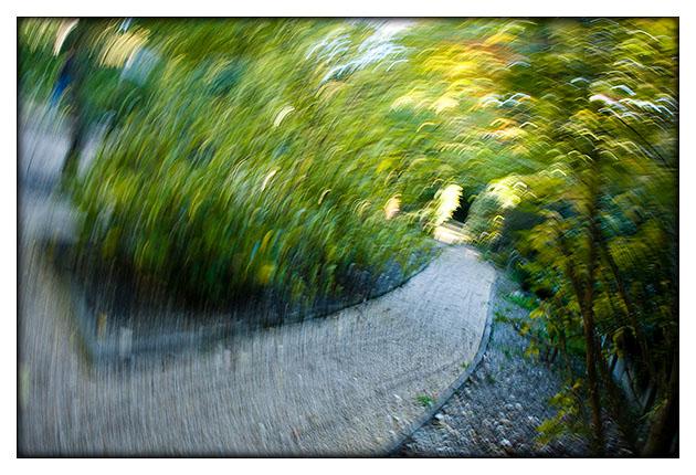 Chemin tourbillonnant