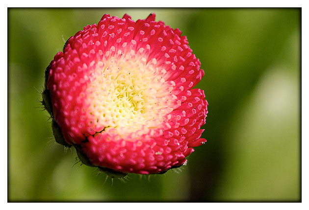 Demie fraise