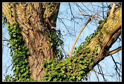 Branche Velvia