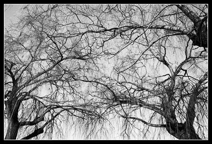 Branches entremélées